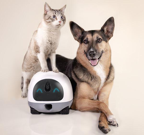un gato sentado sobre el robot VAVA y un perro tumbado detrás
