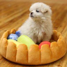 cama con forma de tarta de frutas con un cachorro de perro sentado encima