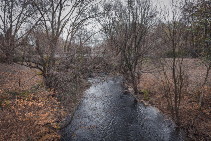 foto de prueba de un bosque con los efectos del Mi Mix 3