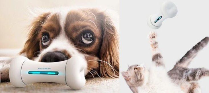 un perro tranquilo con su hueso inteligente y un gato intentando coger el juguete