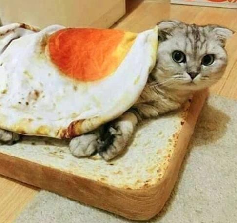 Un gato sobre almohada de tostada con una manta de huevo frito