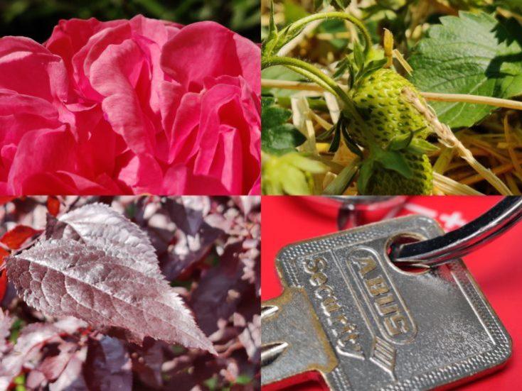 Diferentes fotgrafías macro con el One Plus 7 Pro