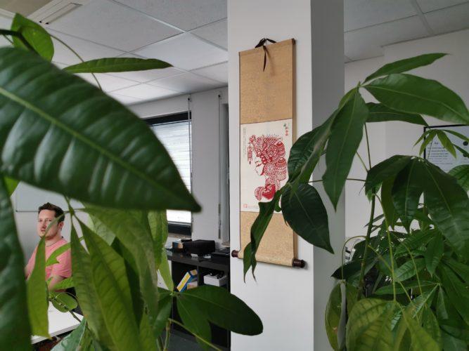 Foto de prueba de una planta y Jens
