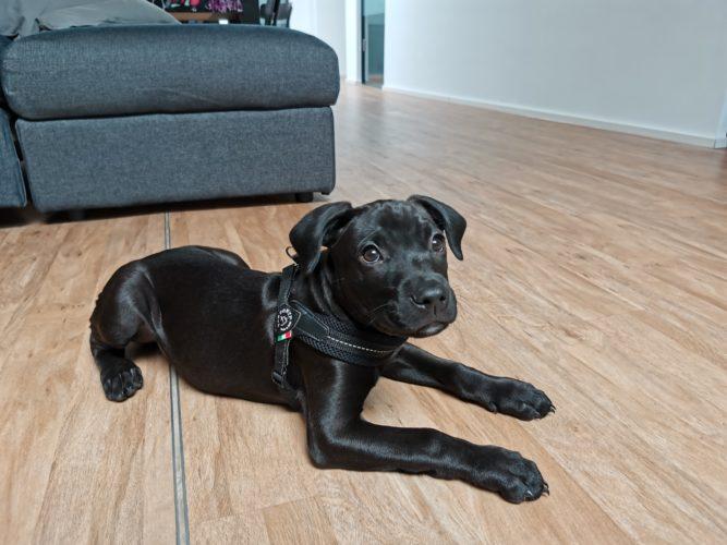 Foto de prueba del perro