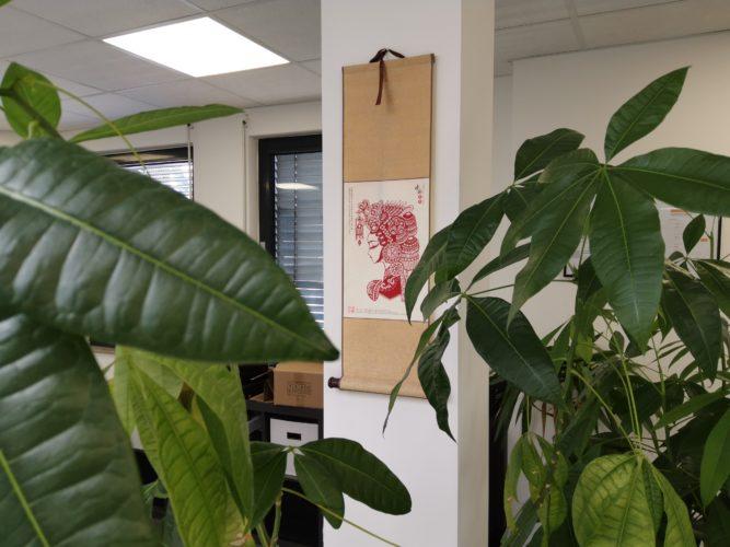 Foto de prueba de plantas y un cuadro en la oficina