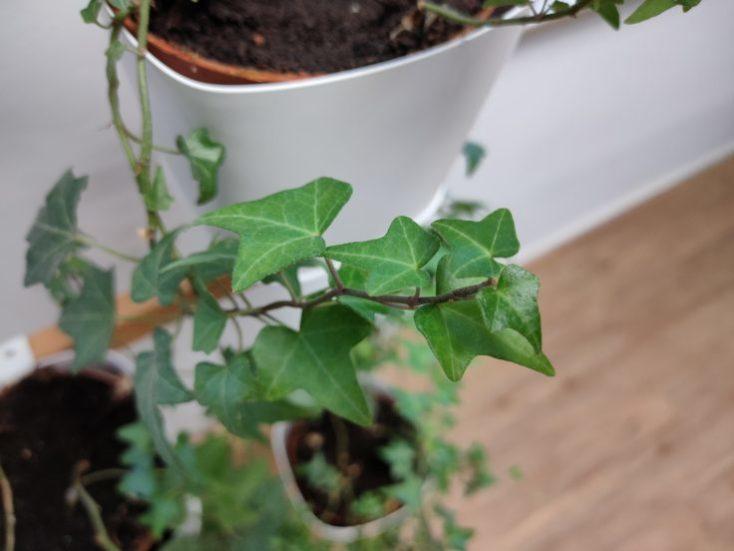 Foto de prueba de una planta con el Realme X2 Pro