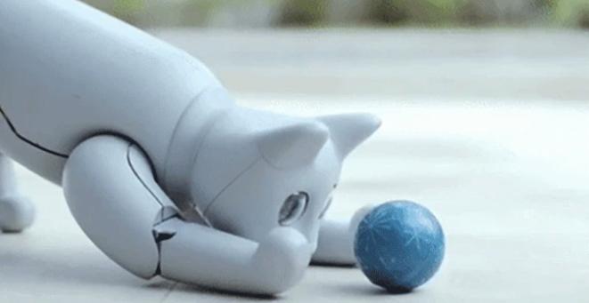 MMarsCat el gato robótico jugando con una pelota