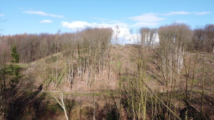 Foto de prueba de árboles y el cielo con el drone Mavic Mini de DJI
