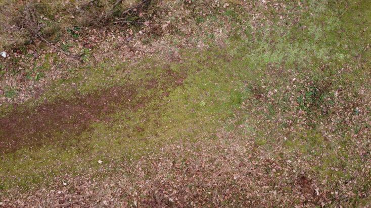 Foto de prueba en el campo con el drone Mavic Mini de DJI