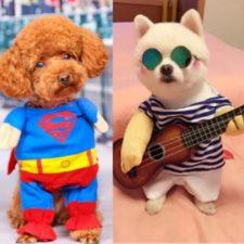 Perros con disfraz de Superman y de guitarrista